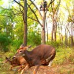 Finally poultry pics – trail camera pictures – hunting new you are able to – ny empire condition hunting forum – bow hunting, fishing, bear, deer