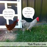 Poultry jokes