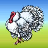 Turkey. Vector drawing Royalty Free Stock Photography