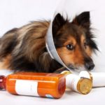 Canine Painkillers