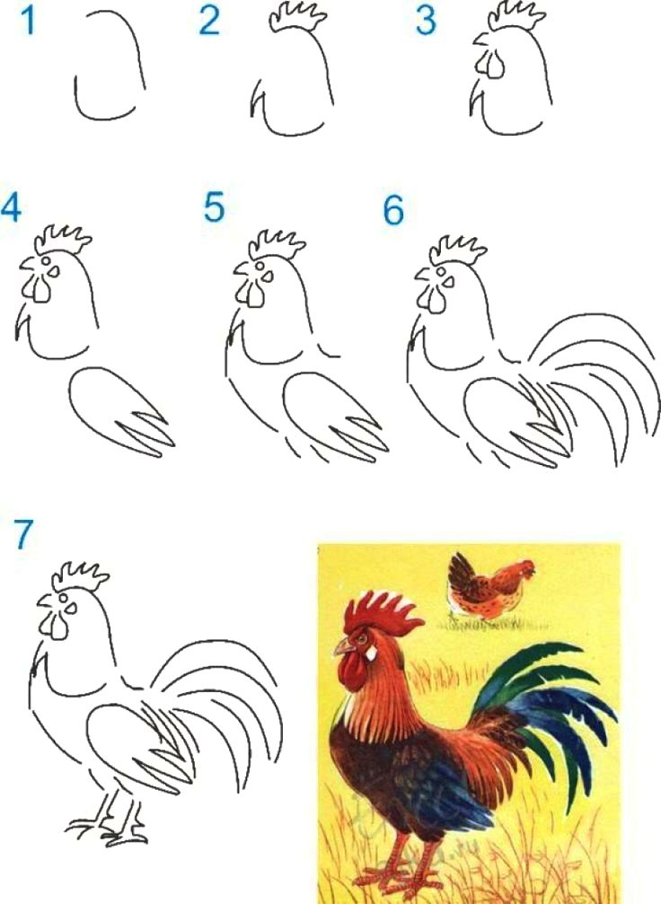 Poultry thanksgiving directed drawing teaching ideas                      primary           activities